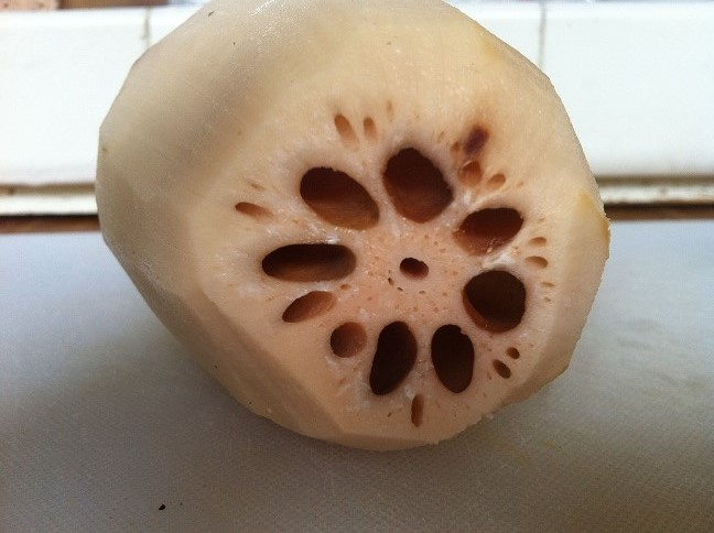 Lotus Root Side View